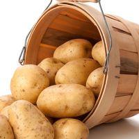 Картофель (лат. Solanum tuberosum)