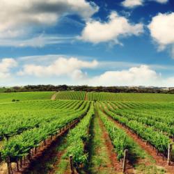 Турция No.1 в Европе в сельскохозяйственном секторе