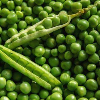 Горох посевной (лат. Pisum sativum)