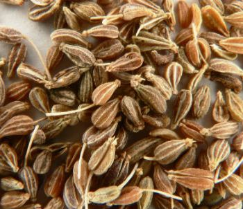 Анис (лат. Pimpinella anisum)